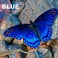 The color blue and it attributes