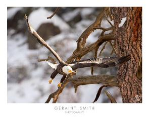 Geraint Smith's Great shot of an Eagle