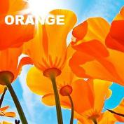The color orange and its attributes