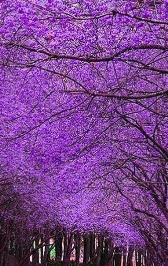 the color violet